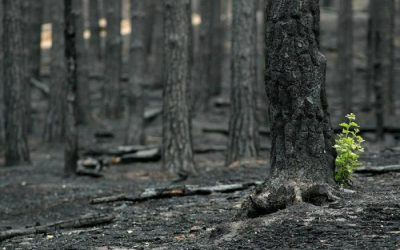 After the fire:  Sourcing hope in the place beyond self-concern